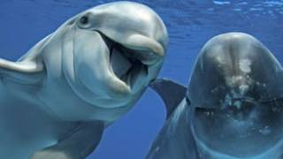Scientists say dolphins should be treated as 'non-human persons'