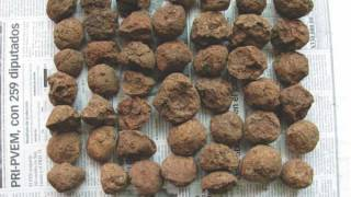 Mayans Used Clay Balls for Cooking