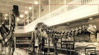 The Brontosaurus never existed: A tale from the Bone Wars