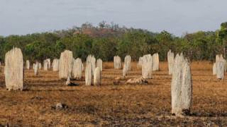 Termite Mound Magnetic Alignment