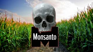 Monsanto's Bt-Toxins Found to Kill Human Embryo Cells