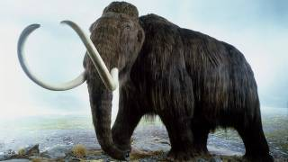Scientists Are Close to Resurrecting the Woolly Mammoth