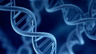 Breakthrough in Understanding the Genetic Contribution to Intelligence