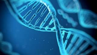 The Genetic Potential for Intelligence
