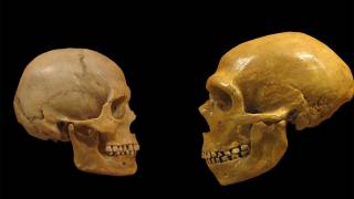 Gene Study Suggests Homo Sapiens Migrated into Africa, Not Out of the Continent