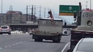 Naked Man Jumps onto Moving Truck Near Dulles Airport