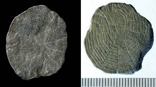 Bizarre 'Spider Stones' Found at Site of Neolithic Sun-Worshipers on Baltic Island Bornholm