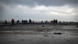 Crowds Flock to Ancient Forest on Redcar Beach After Beast from the East Revealed Site