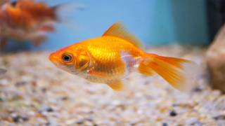 Swedish Woman Charged for Saying Immigration Leads to a 'Goldfish Level IQ'