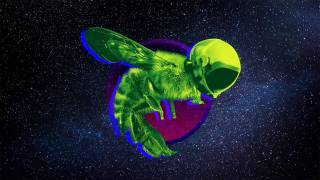 The Mystery of the 'SpaceBees' Just Got Even Weirder