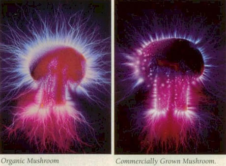 Energy Fields Around Mushroom Kirlian Photography