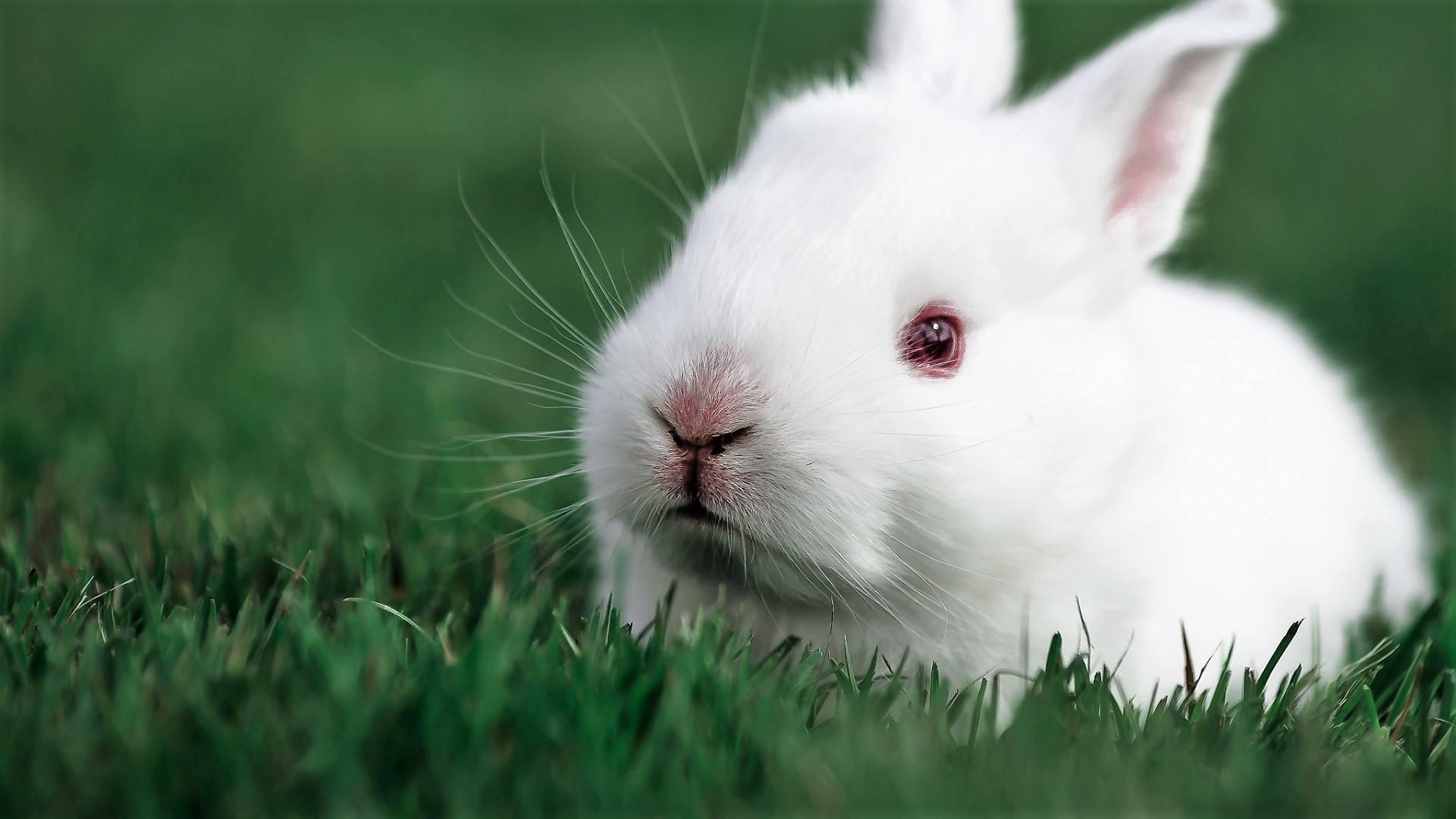 'White Rabbit' Twitter Account Dropped 28,000 Hillary ...